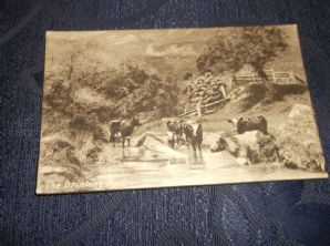 VINTAGE POSTCARD PANEL CARD THE DRINKING POOL HERD OF COWS W & K LONDON